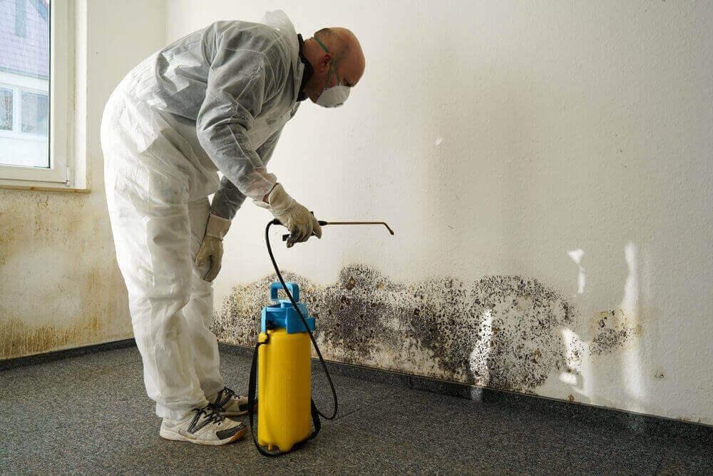 mold inspection baltimore