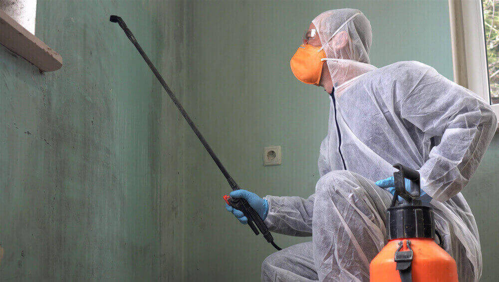 Mold inspectors in Maryland
